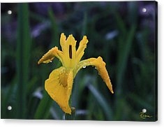 Heart Of Iris Acrylic Print