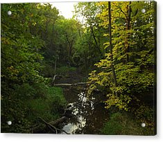 Acrylic Print featuring the photograph Heart Of The Woods by Viviana  Nadowski