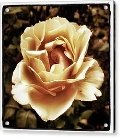 Acrylic Print featuring the photograph Heart Rose. Imagine Your Heart Is A by Mr Photojimsf