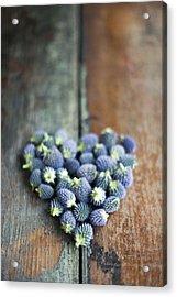 Heart Shaped Blue Thistle Buds Acrylic Print