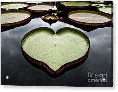 Heart Shaped Lily Pad Acrylic Print