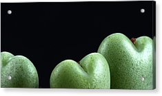 Acrylic Print featuring the photograph Heart Shaped Lithops by Catherine Lau