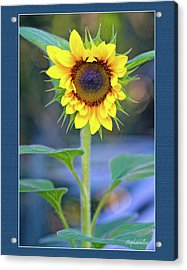 Heart Shaped Sunflower Acrylic Print by Stephanie Hayes
