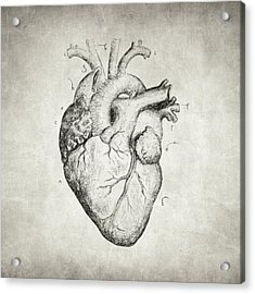 Acrylic Print featuring the drawing Heart by Taylan Apukovska