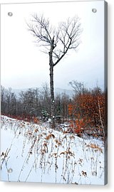 Heart Tree Winter  Acrylic Print by Catherine Reusch Daley