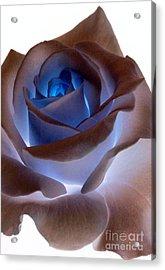 Heartglow Rose Acrylic Print