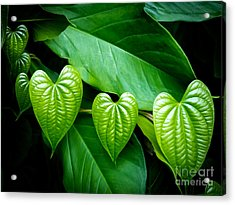 Hearts In Nature Acrylic Print