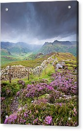 Heather And The Langdale Pikes On A Stormy Day In The Lake District Acrylic Print