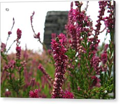 Heather Acrylic Print by Greg Weflen