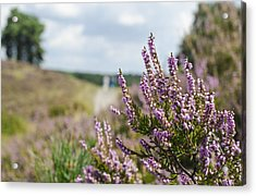 Heather Acrylic Print