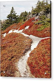 Heather Run Acrylic Print