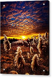 Heaven And Earth Acrylic Print by Phil Koch