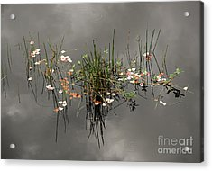 Heaven In The Swamp Acrylic Print