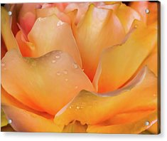 Acrylic Print featuring the photograph Heaven Scent by Karen Wiles