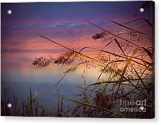 Acrylic Print featuring the photograph Heavenly Bliss by Brenda Bostic