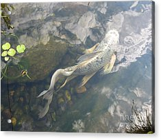 Heavenly Fish Acrylic Print