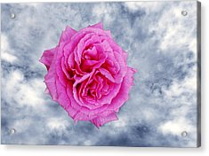 Heavenly Rose Acrylic Print by Terence Davis