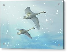 Acrylic Print featuring the photograph Heavenly Swan Flight by Patti Deters