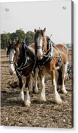 Heavy Horses Acrylic Print by Gerry Walden