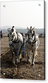 Heavy Horses Working Acrylic Print by Gerry Walden