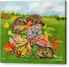 Hedgehogs Inside Scarf Acrylic Print by EB Watts