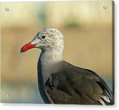 Heermanns Gull Digital Art Acrylic Print