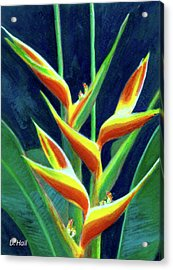Heliconia Flowers #249 Acrylic Print by Donald k Hall