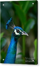 Acrylic Print featuring the photograph Hello Beautiful by Scott and Amanda Anderson