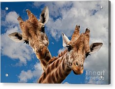 Acrylic Print featuring the photograph Hello by Christine Sponchia