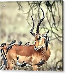 Acrylic Print featuring the photograph Hello Deer by Kathy Tarochione
