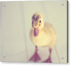 Hello Ducky Acrylic Print by Amy Tyler