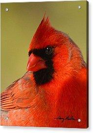 Hello Red Acrylic Print