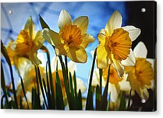 Hello Spring Acrylic Print by Cricket Hackmann