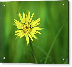 Acrylic Print featuring the photograph Hello Wild Yellow by Bill Pevlor