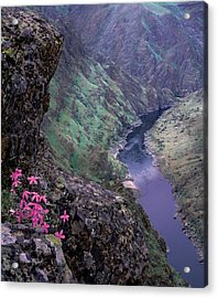 Hells Canyon Acrylic Print