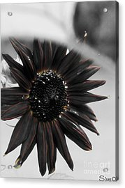 Hells Sunflower Acrylic Print by September  Stone