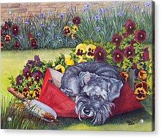 Helping The Gardener Acrylic Print
