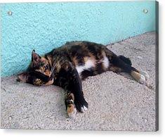 Hemingway Cat Acrylic Print by JAMART Photography
