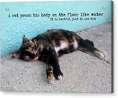 Hemingway Cat Quote Acrylic Print by JAMART Photography