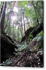 Hemlock Gorge Acrylic Print