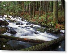 Hemlock Stream In Spring Acrylic Print
