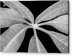 Hemp Tree Leaf Acrylic Print
