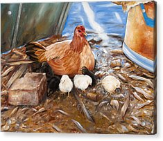 Hen And Biddies Acrylic Print