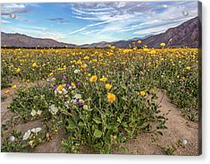 Henderson Canyon Super Bloom Acrylic Print by Peter Tellone