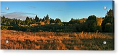 Acrylic Print featuring the painting Henry Cowell Sunset by Larry Darnell