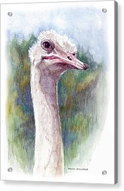 Henry The Ostrich Acrylic Print by Mamie Greenfield