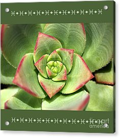 Hens And Chicks Succulent And Design Acrylic Print