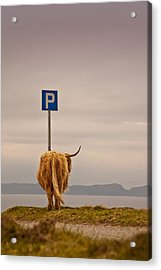 Her Favourite Pick-nick Spot In The Highlands Acrylic Print by Dorit Fuhg