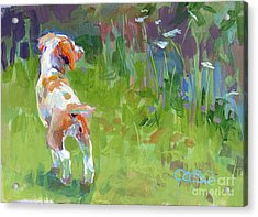 Her First Point Acrylic Print by Kimberly Santini
