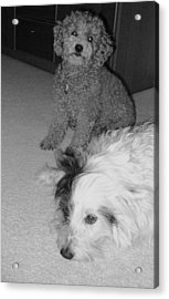 Her Last Day Sparky Stays Acrylic Print